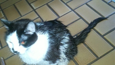 Click image for larger version.  Name:wetcat20.jpg Views:210 Size:49.2 KB ID:5814